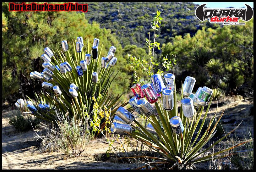 Plants are decorated with beer cans near Mike's Sky Rancho.